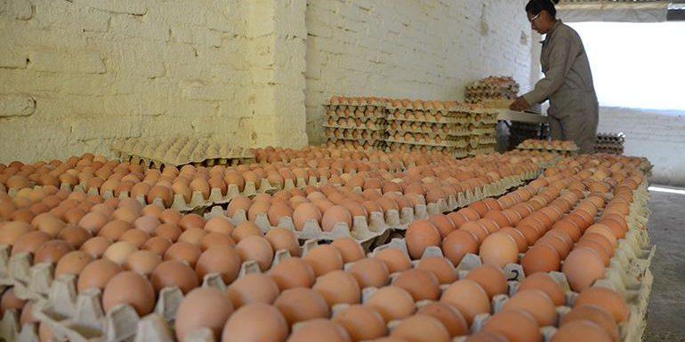 Tras alza en precios de huevos, Agricultura interviene – https://www.24horas.com.do